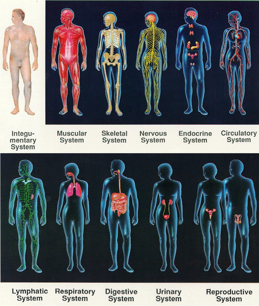 the systems of the body